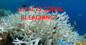 What is coral bleaching?